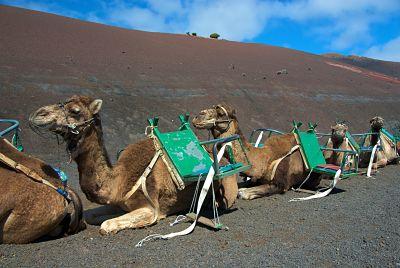 Klimaat Tenerife