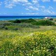 Vakantie Menorca